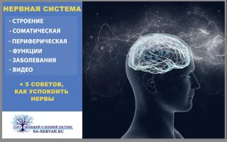 Нервная система + 5 ценных советов как успокоить нервную систему.