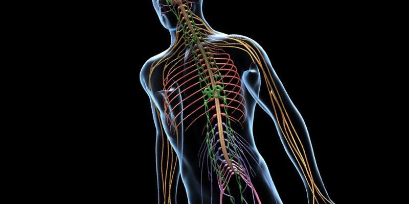 Заболевания нервной системы