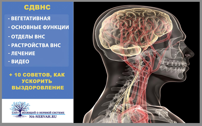 Надсегментарная дисфункция вегетативной нервной системы